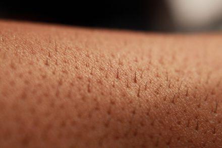 La pell, el gran òrgan del cos